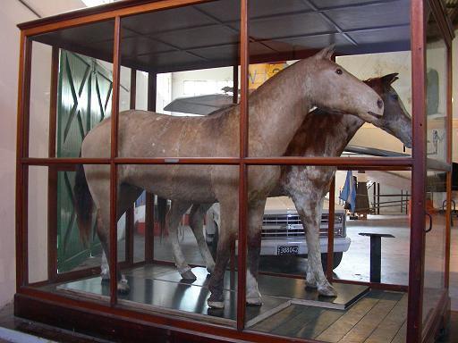 Embalsamados en el Museo Enrique Udaondo de Luján.
